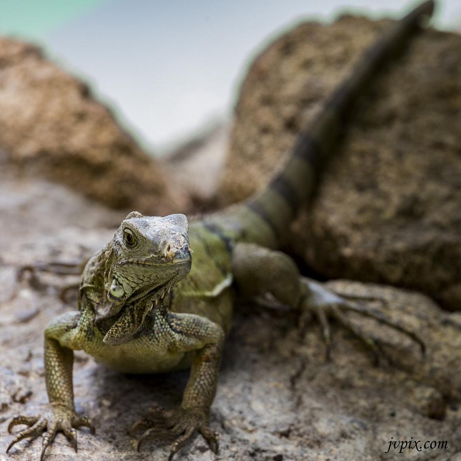 Reptilia 3