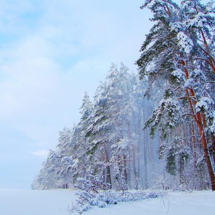 Снежный день, Fujifilm FinePix S3Pro