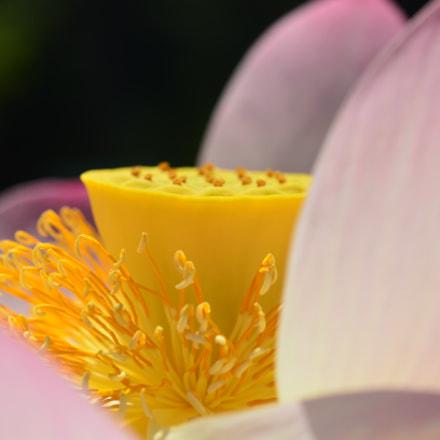 Geneva Botanical Garden, Nikon D7000, AF Micro-Nikkor 60mm f/2.8