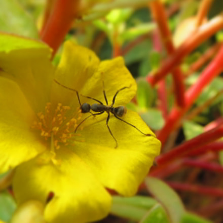 Ant and the flower ......, Canon IXUS 510 HS