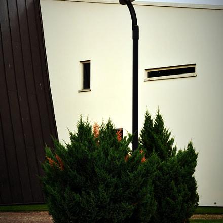 Yew Trees, ees NIKON D5200, AF-S DX VR Zoom-Nikkor 18-55mm f/3.5-5.6G