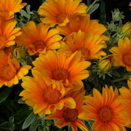 orange colors, Nikon E4100