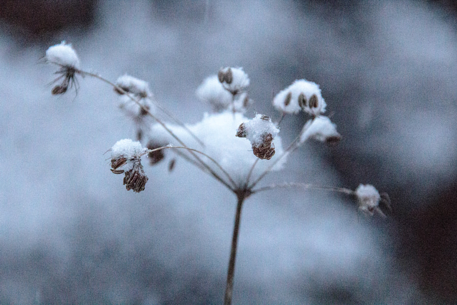 il neige (it snows) de Christine Druesne sur 500px.com