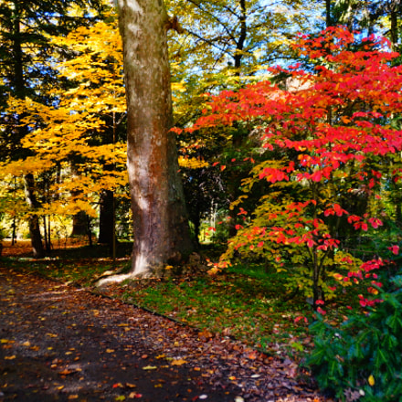 Botanical garden path, Sony SLT-A37, Minolta/Sony AF DT 18-200mm F3.5-6.3 (D)