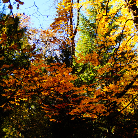 Trees in autumn, Sony SLT-A37, Minolta/Sony AF DT 18-200mm F3.5-6.3 (D)