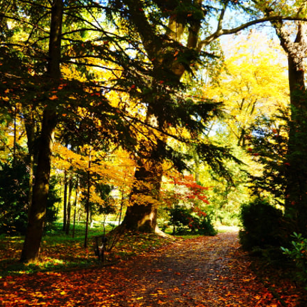 Botanical garden trees in, Sony SLT-A37, Minolta/Sony AF DT 18-200mm F3.5-6.3 (D)