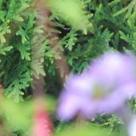 Flower Blur, Fujifilm FinePix S4530