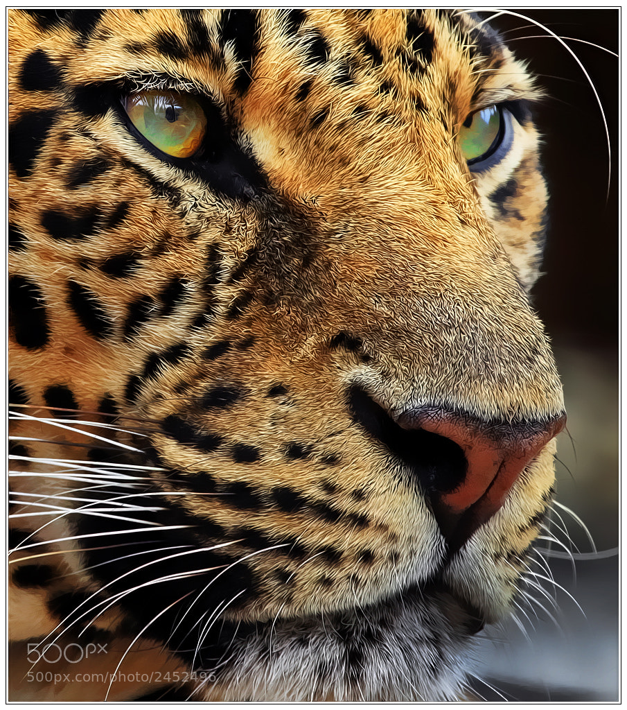 Photograph Close up by Klaus Wiese on 500px