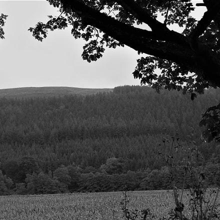 Wales, Nikon COOLPIX P2