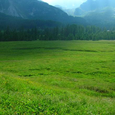 meadow and fog, Nikon E4100