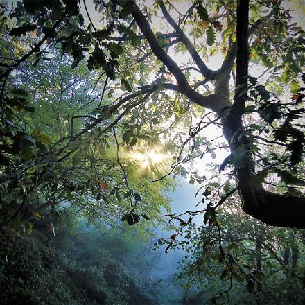 Jungle in Cévennes, Sony DSC-W320