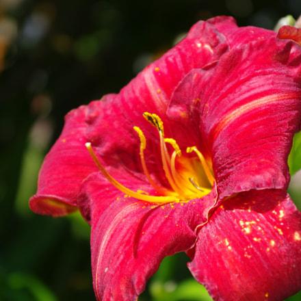 Fleur, Pentax K20D, smc PENTAX-DA 18-55mm F3.5-5.6 AL II