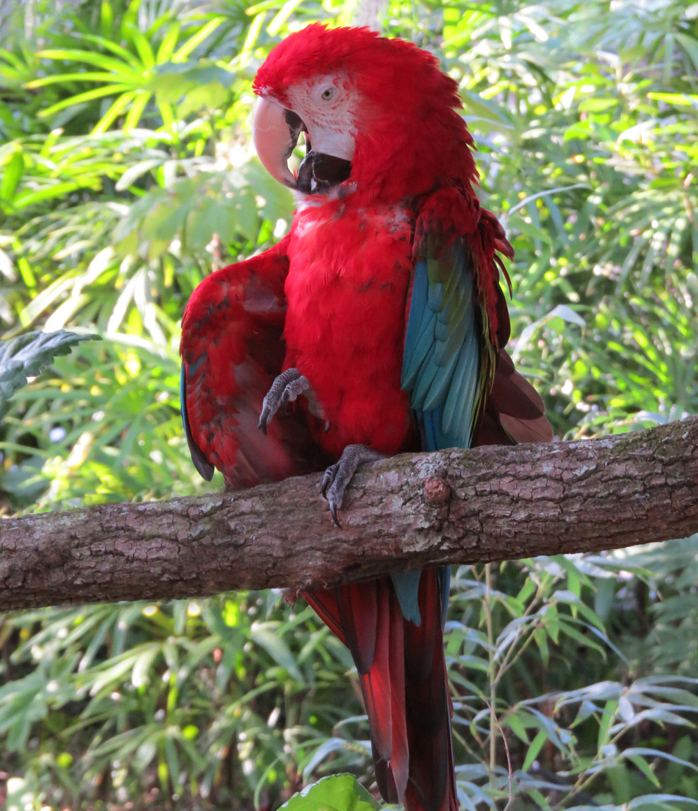 Photograph Fiesty Macaw by Raymond Obomsawin on 500px