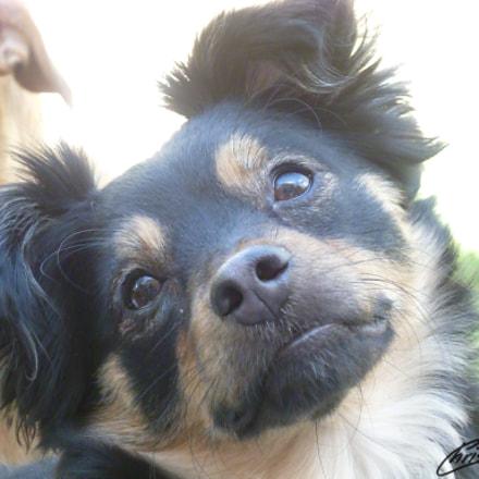 Puppy Eyes, Panasonic DMC-FS30