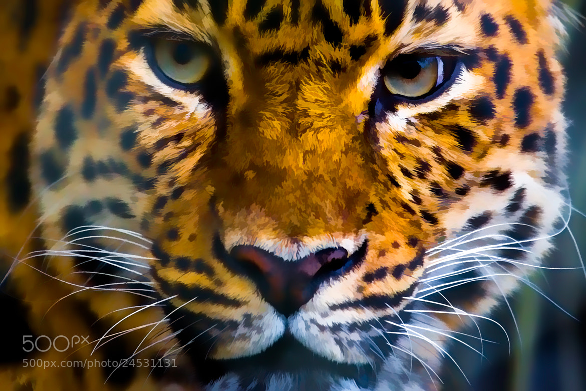 Photograph Cat Eyes by George Bloise on 500px