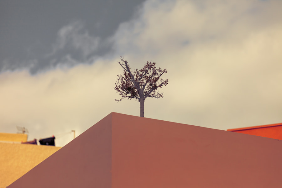 Tree on Terrace by Eleni Synodinos on 500px.com