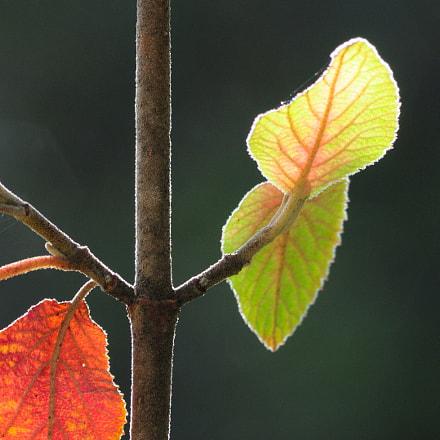 feuilles soleil, Nikon D300, AF Nikkor 70-210mm f/4-5.6D