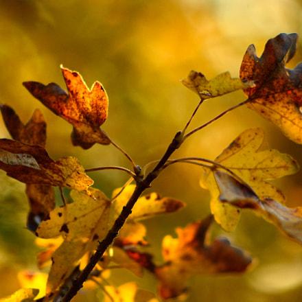 feuilles automne, Nikon D5200, AF Nikkor 70-210mm f/4-5.6D