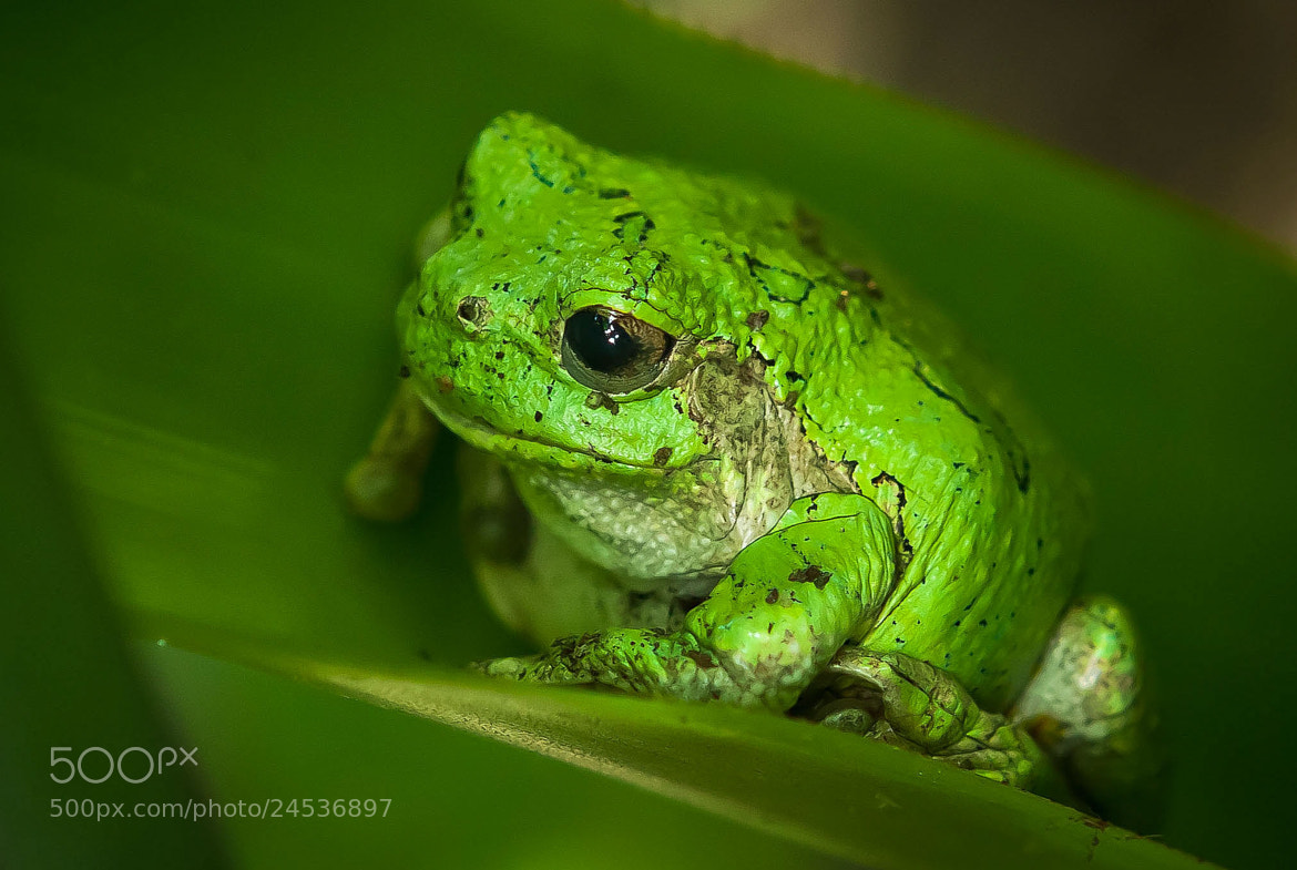 Photograph Green by Bruce Valentine on 500px