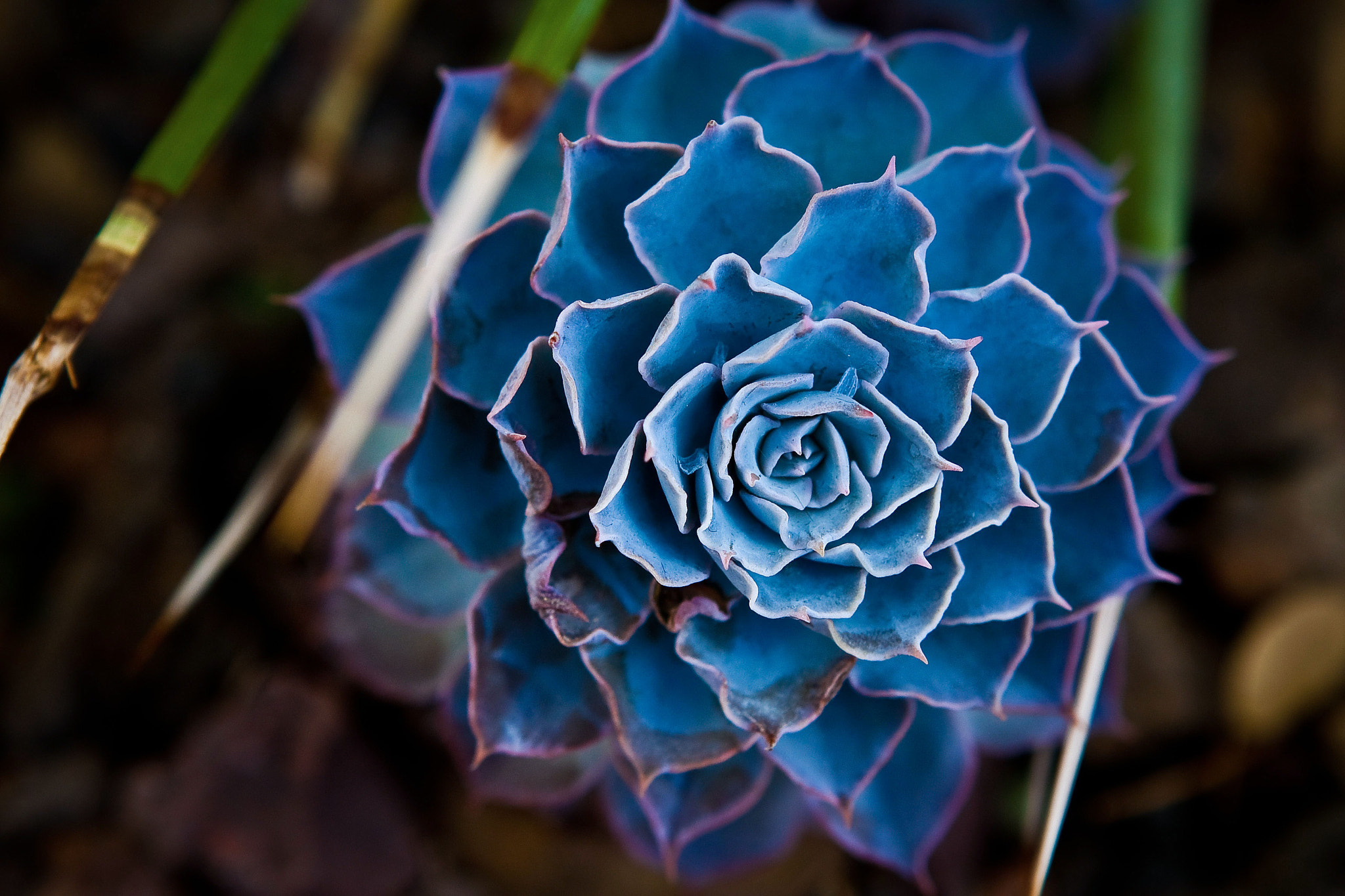Photograph Blue by Bruce Valentine on 500px