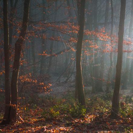 morning light, Sony DSC-T70
