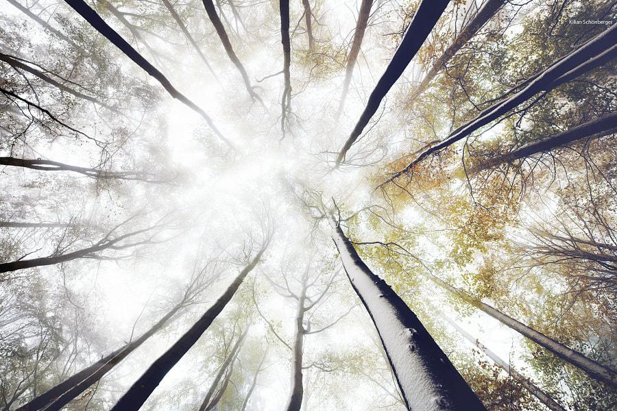 Winter Autumn Mix by Kilian Schönberger on 500px.com