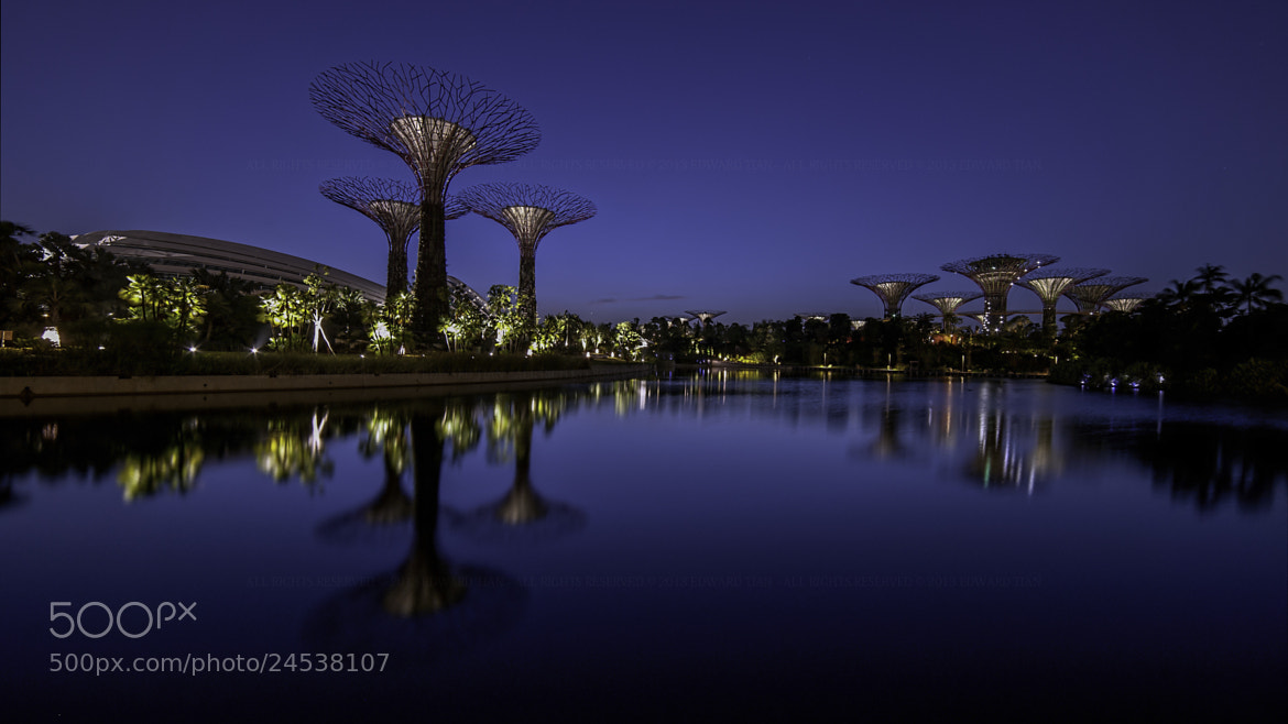 Photograph Super Trees by Edward Tian on 500px