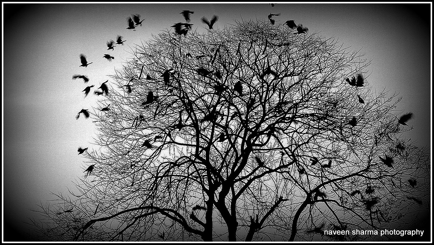 Photograph Crow's paradise by naveen sharma on 500px