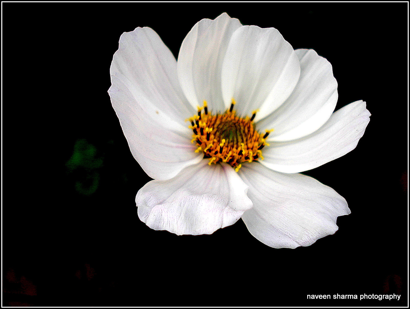 Photograph flower of the day by naveen sharma on 500px