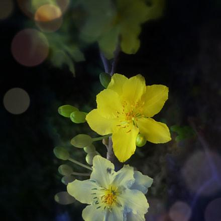 Mai flower, Panasonic DMC-FS4
