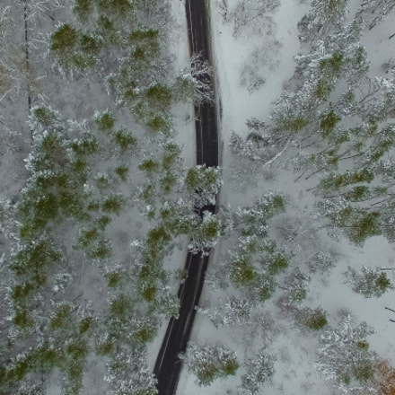 Winter Forest (Aerial)