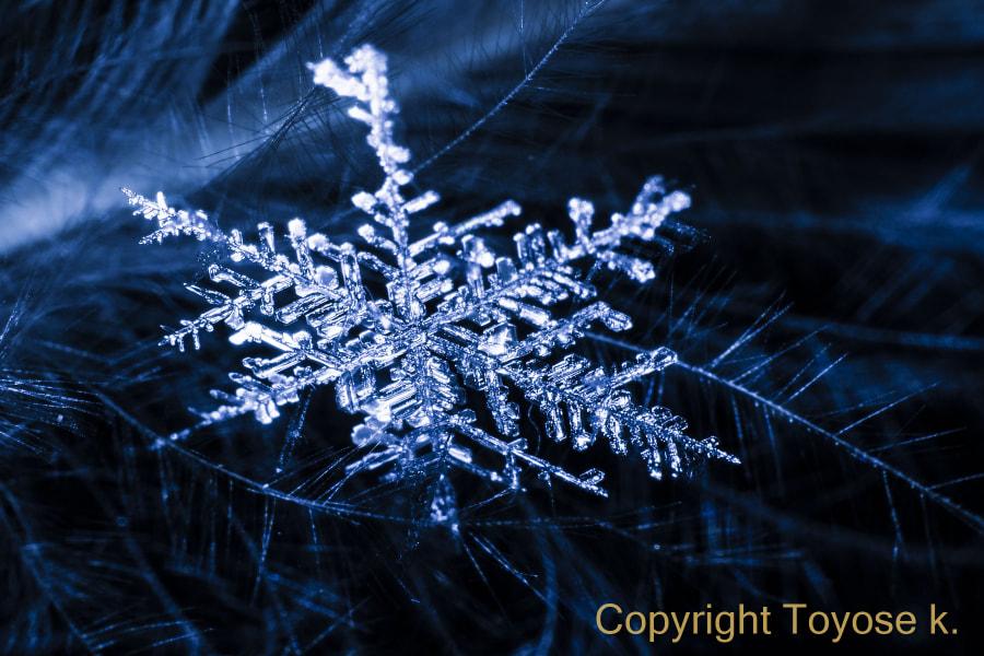 500px.comのKousuke Toyoseさんによる雪の結晶