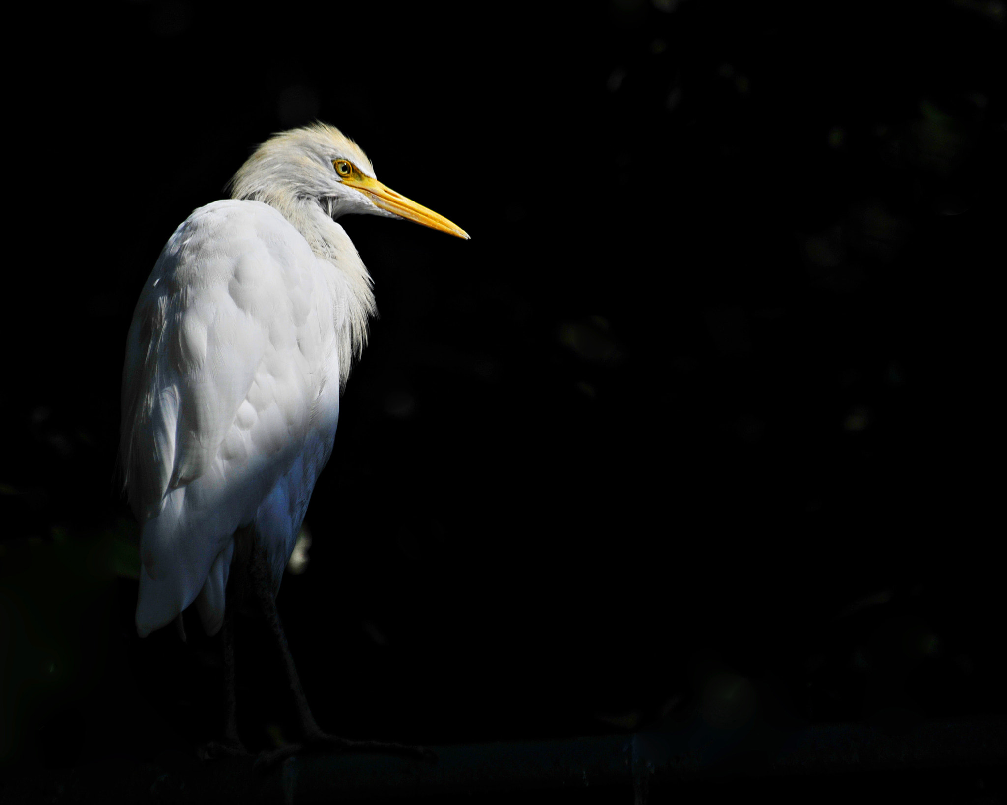 Photograph Serious Egret by Alfian Noor on 500px