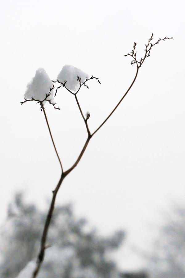 Fleur de neige (Snow flower) de Christine Druesne sur 500px.com