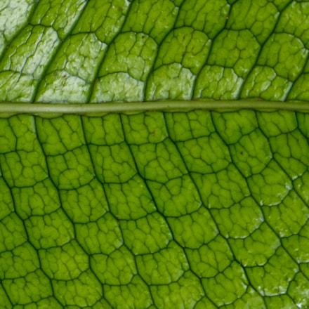 Leaf Detail, Panasonic DMC-FZ47