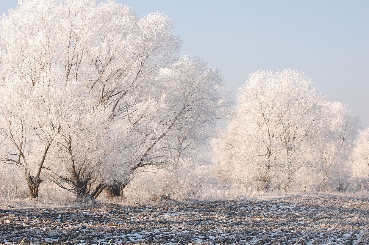 Photograph White Trees by Andrei Barbu on 500px
