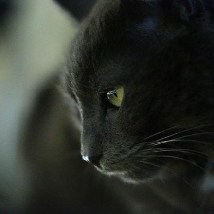 Green Stare, Canon EOS 70D, Canon EF 50mm f/1.8