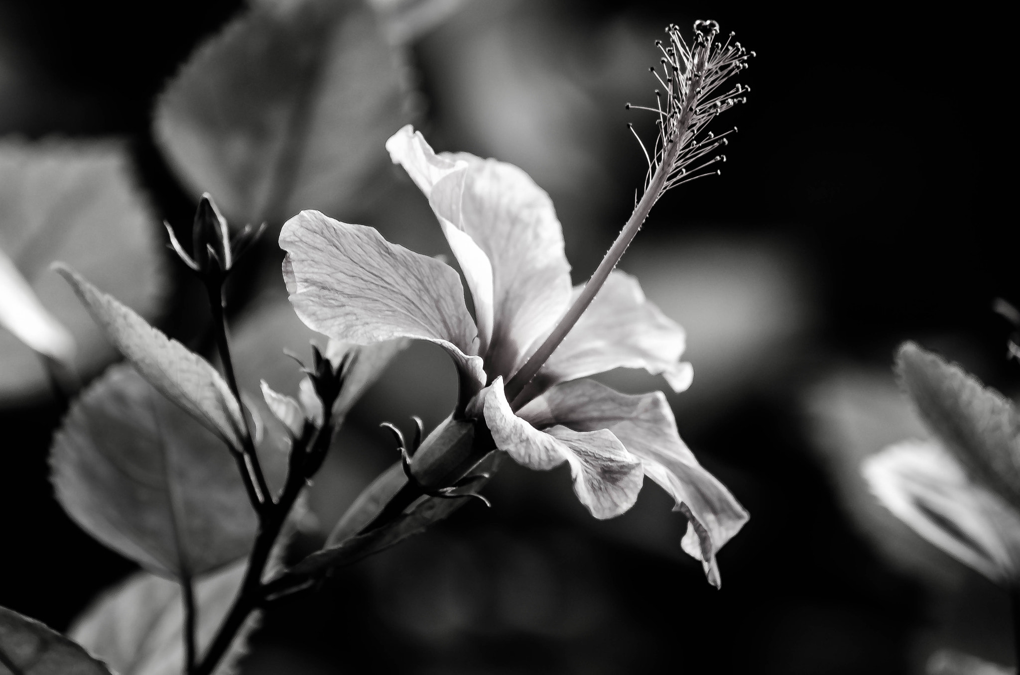 Photograph Flora in Black and White by julian john on 500px