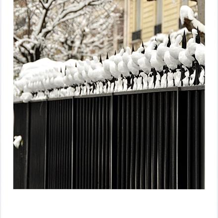 Black and white, Nikon D7000, Sigma 18-250mm F3.5-6.3 DC OS HSM
