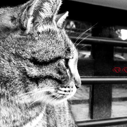 Street cat, Fujifilm FinePix S8300