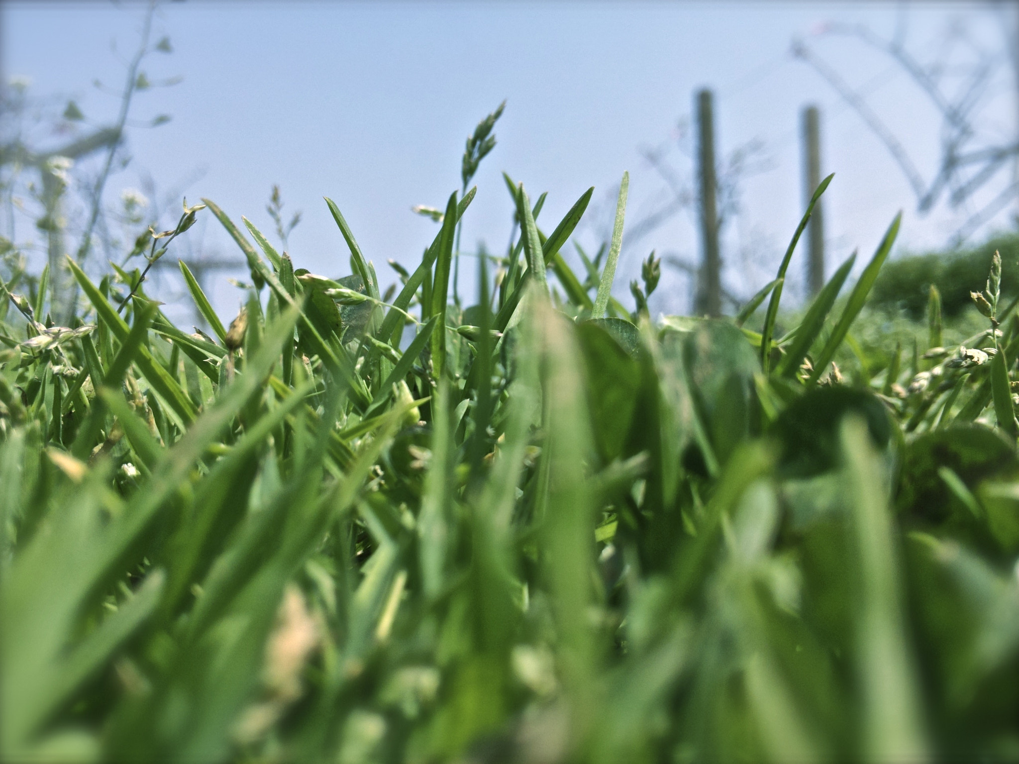 Photograph grass by pgang_96 on 500px