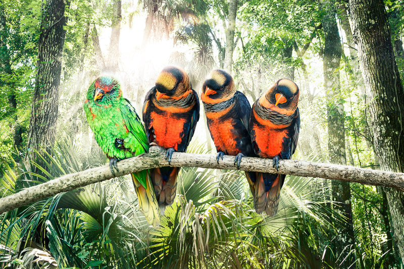 Photograph Birds hangin' Out by Peter Hernandez on 500px