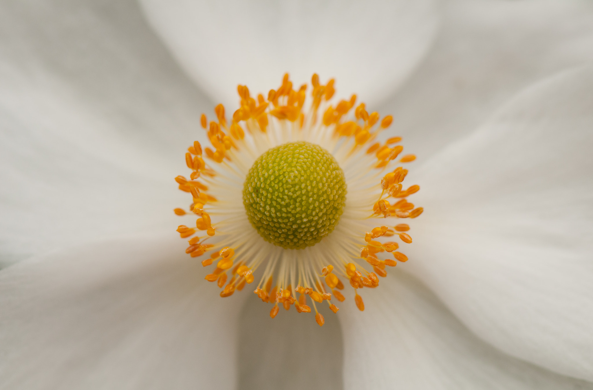 Photograph Yellow on White by Pat Charles on 500px