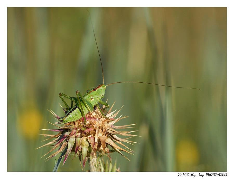 Photograph Patience, Young Grasshopper by Marko Buntic on 500px