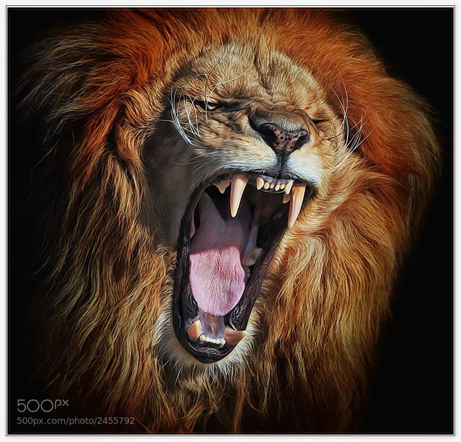 Photograph Rage by Klaus Wiese on 500px