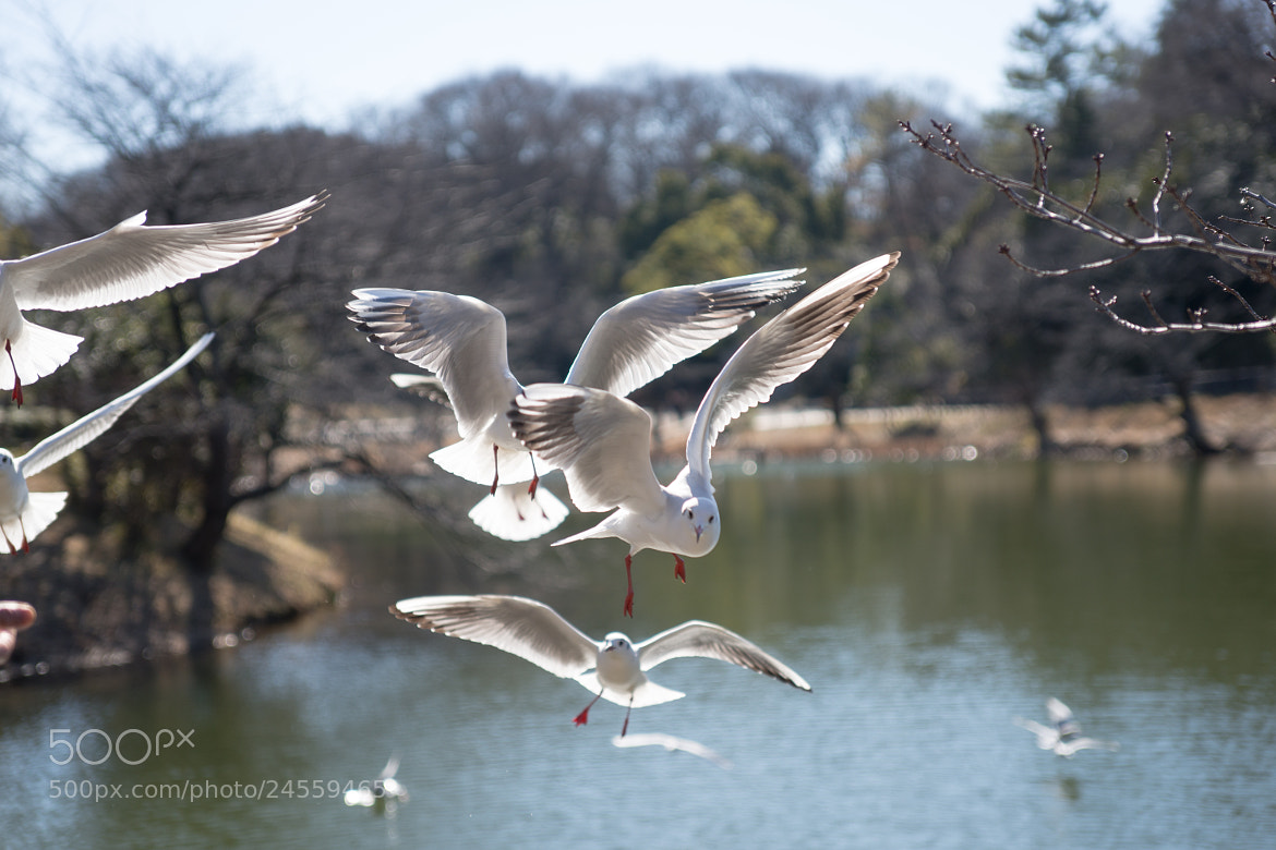 Photograph Black-headed Gull by marbee .info on 500px