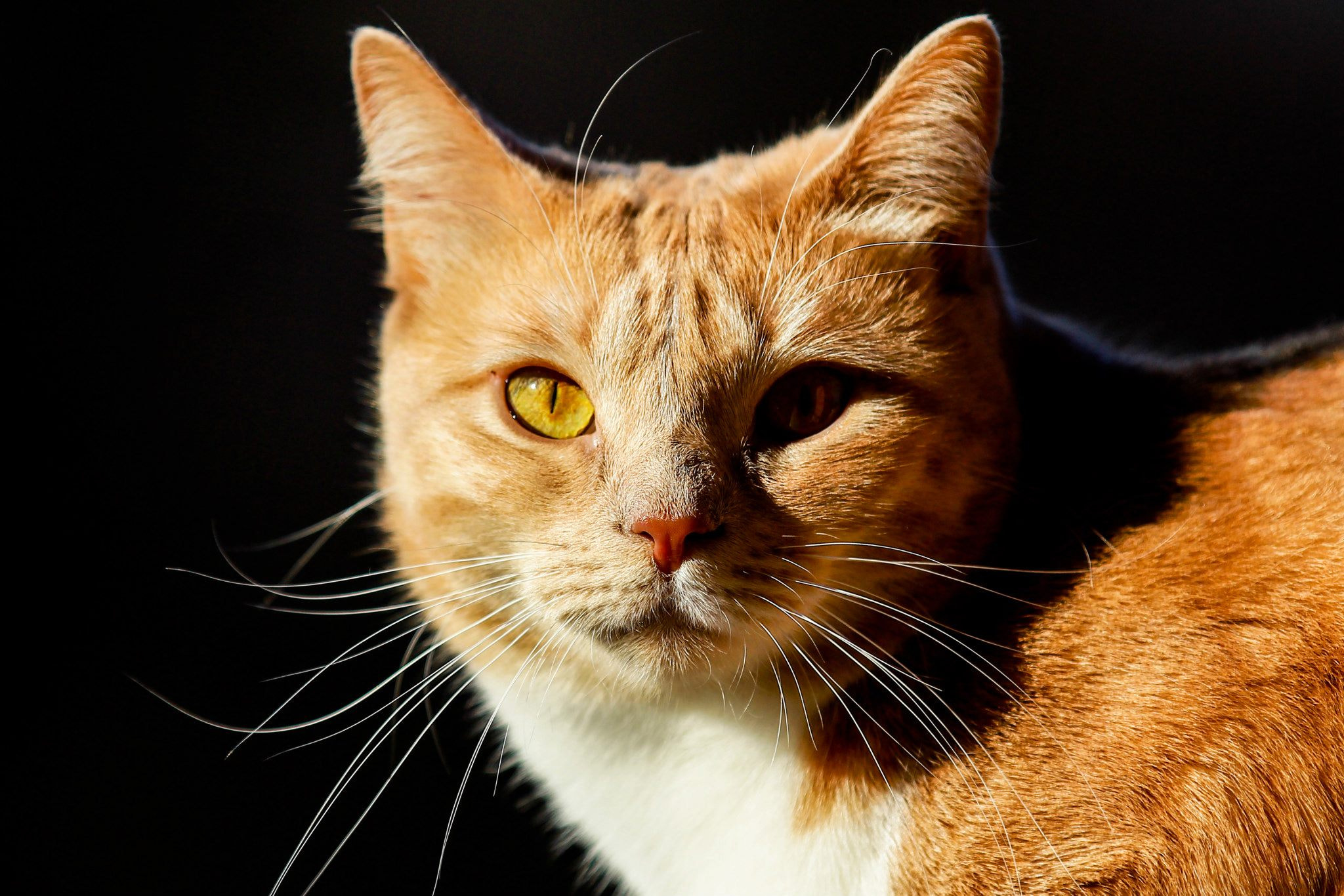 Photograph Cat by Rabaglio Alessandro on 500px