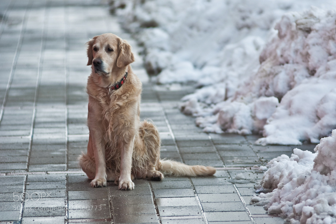 Photograph dog (02) by Vlado Ferencic on 500px