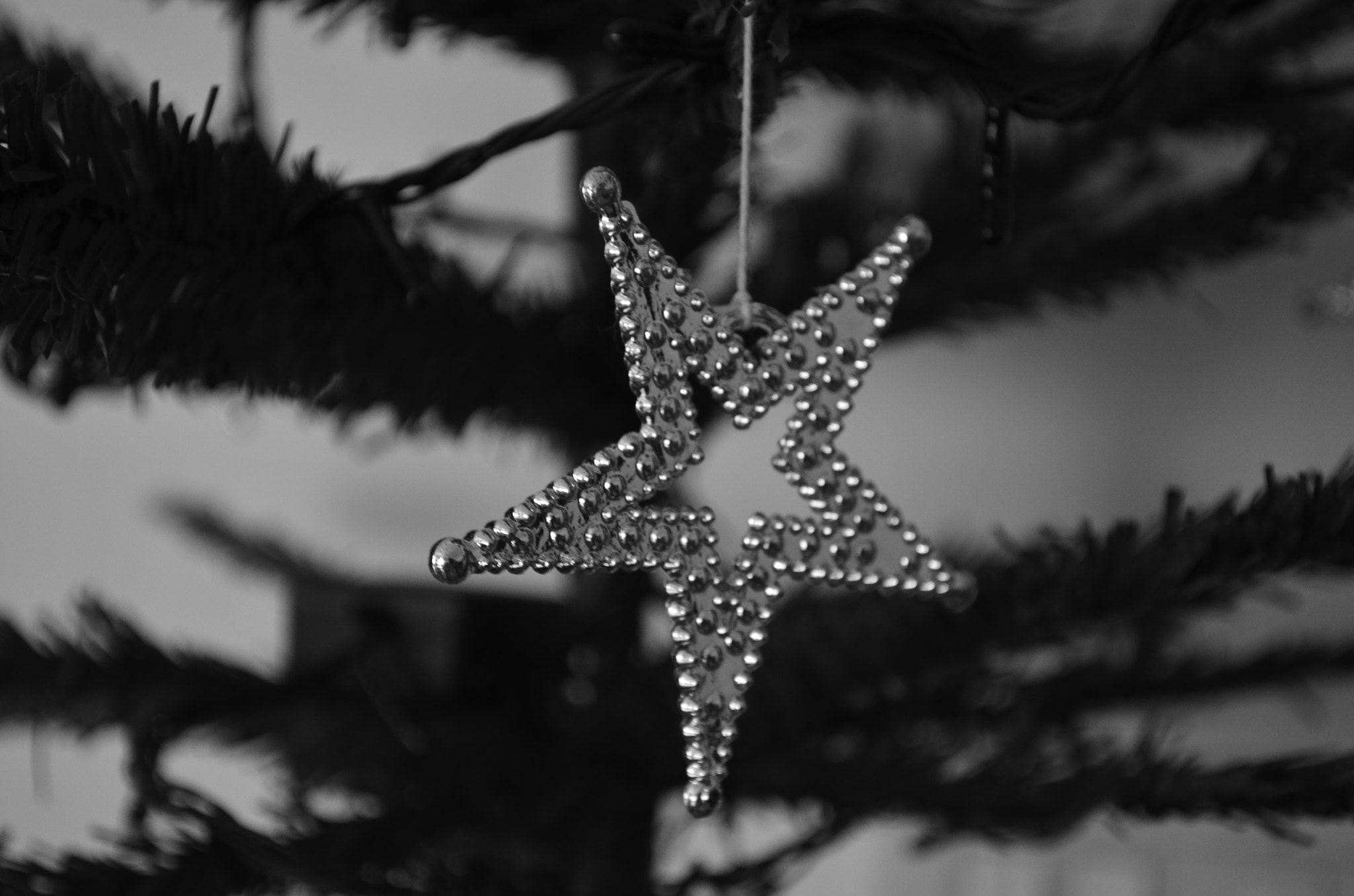 Photograph Star in Christmas Tree by Ajan Ajanthan on 500px