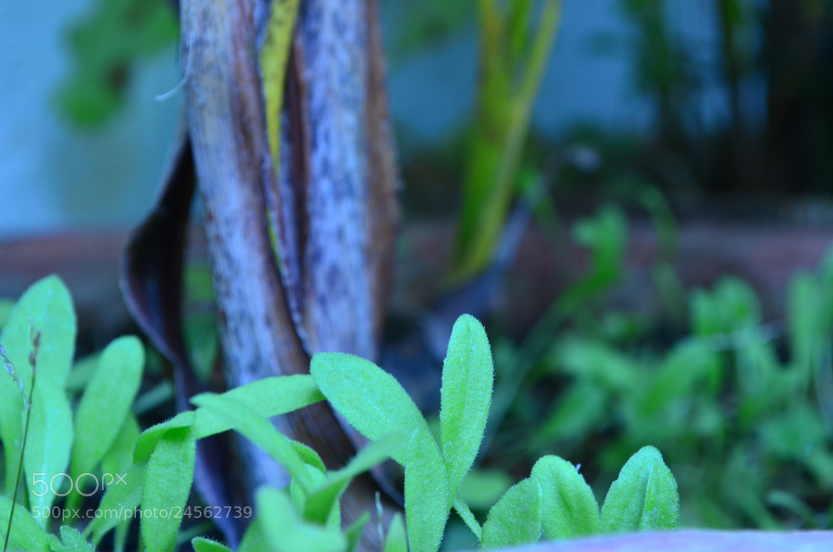 Photograph Green Leaves by Ajan Ajanthan on 500px